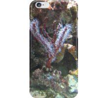Seahorse in aquarium iPhone Case/Skin