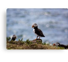 Puffin In The Middle Canvas Print
