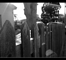 Fenced In by Lauren Neely