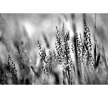Free as the Wind  Photographic Print