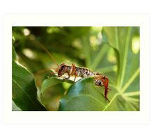 Weta, native New Zealand grasshopper Art Print
