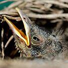 Newborn by Steve Small