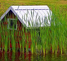 Waterfront property by Karen Cook