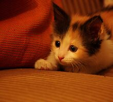 Calico Couch Potato! by meowiyer