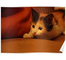 Calico Couch Potato! Poster
