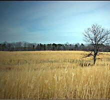 Golden Fields by Lauren Neely