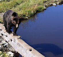 Big Black Bear by Adam Robbins