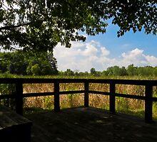 Sheldon Marsh Scenic Overlook by SRowe Art