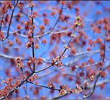 Spring is Here by Lauren Neely