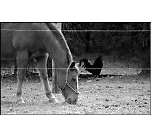 On the Farm Photographic Print