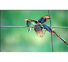 Tangled Vibrance Photographic Print