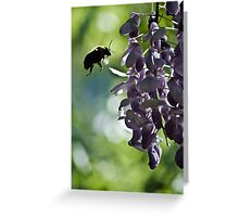 checking out the wisteria Greeting Card