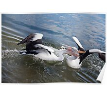 Pelican Fight 6 Poster