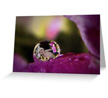 Primrose Baby Dew Drop Greeting Card