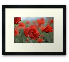 Red Poppies Blooming Framed Print