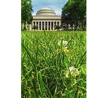 MIT Weeds of Wisdom Photographic Print