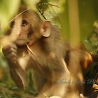 Don't Monkey Around!! by Manik Singh