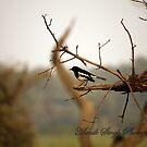 Relax.. by Manik Singh