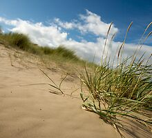 Dunes by Paul Berry