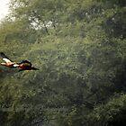 I am free.......free flying!! by Manik Singh