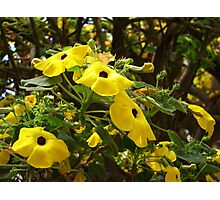 Yellow Flowers For Your Delight  Photographic Print