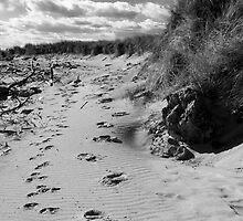 Ragged Beach by Paul Berry