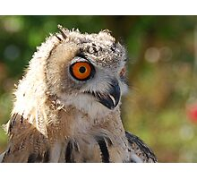 Big Eyed Owl Photographic Print