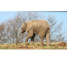 Baby Elephant 4 Photographic Print