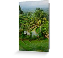 Terrace rice fields in Bali island Greeting Card