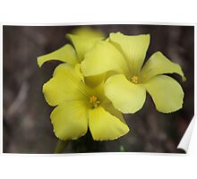 Yellow flower 5675 Poster