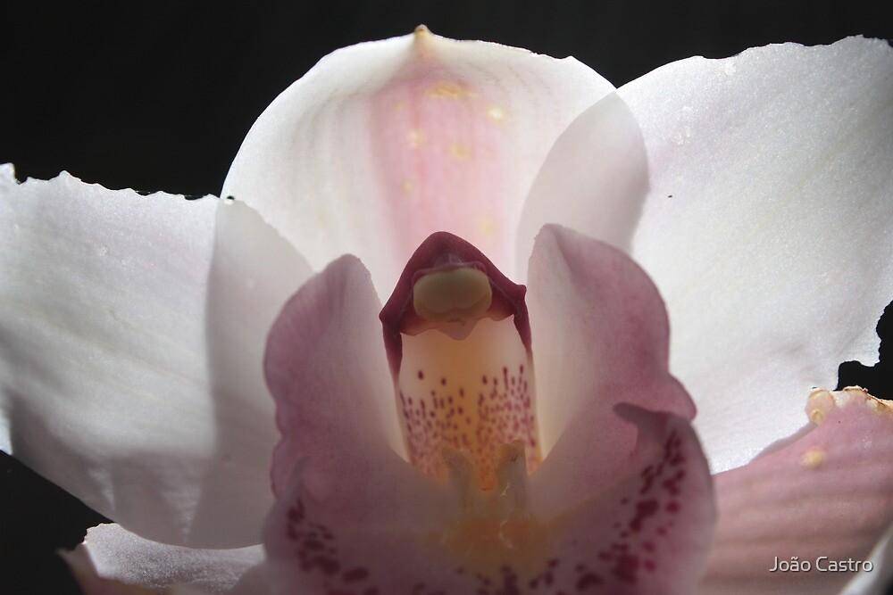 White flower 5968 by João Castro