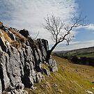 Limestone, Tree and Dale by Stuart1882