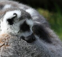 Sleeping Lemar by Evette Lisle