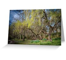 Weeping Willow in Spring Greeting Card