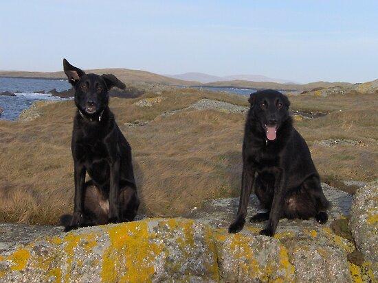 Viking dogs by BeShetland