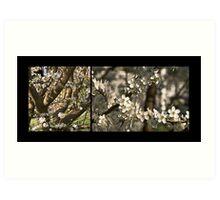 Plum Blossoms (Art Prints) Art Print
