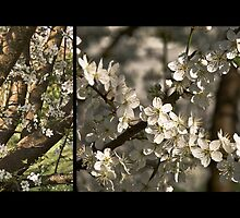Plum Blossoms (Art Prints) by SleepySmile