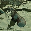 Otter by Russell Couch