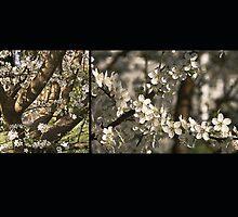 Plum Blossoms (card & postcard) by SleepySmile