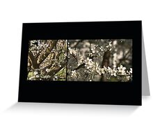 Plum Blossoms (card & postcard) Greeting Card