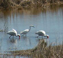 birds do it... by WonderlandGlass