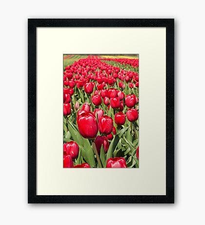 Tulip Row Framed Print