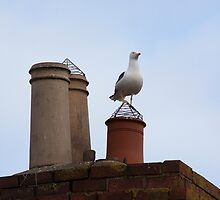 Just perching... by Christopher Ware