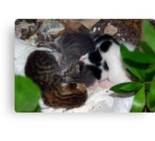 Street Kittens Canvas Print