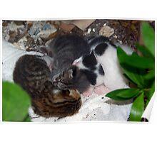 Street Kittens Poster