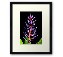 Bromeliad Flower Spike Framed Print