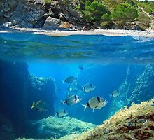 Mediterranean cove and rocky seabed with fish underwater by Dam - www.seaphotoart.com