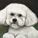 Bichon Frise  by Charlotte Yealey