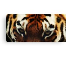 Tiger Eyes - Colchester Zoo Canvas Print