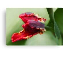 Awaken -Tulip Canvas Print